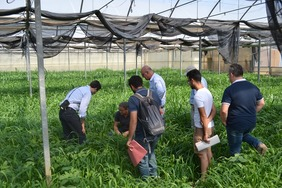 A group of people in a greenhouse analysing green manure.